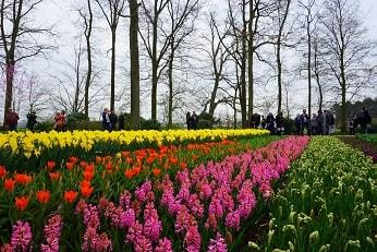 Keukenhof - Amsterdam spring layover